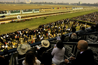 New Year Derby, Royal Calcutta Turf