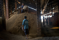 Workers fill baskets with rice husks